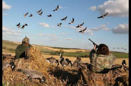 Директор Службы национальной безопасности предложил запретить охоту на 5 лет – премьер-министр поддержал