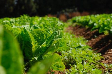 ЕС выделяет 40 млн евро в качестве бюджетной поддержки Агропродовольственному сектору Узбекистана