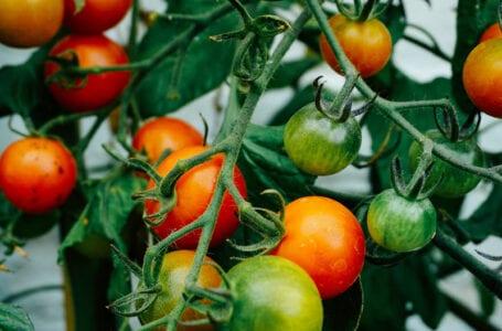Азербайджан и США обсуждают сотрудничество в сфере сельского хозяйства