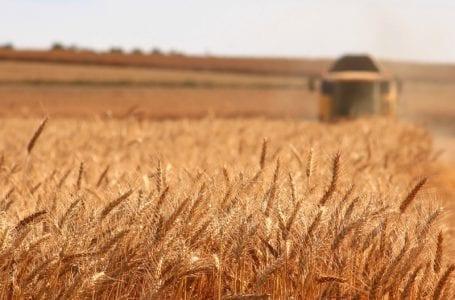 Импорт российского зерна в Азербайджан вырос