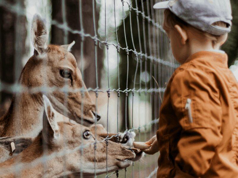 Ташкентский зоопарк закрыт для посетителей
