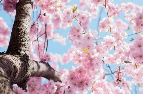 Сегодня отмечают праздник Навруз