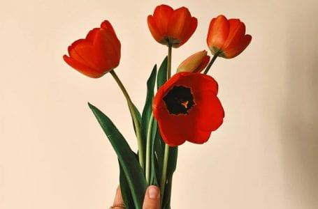 Почему красные тюльпаны стали символом солидарности в Грузии?