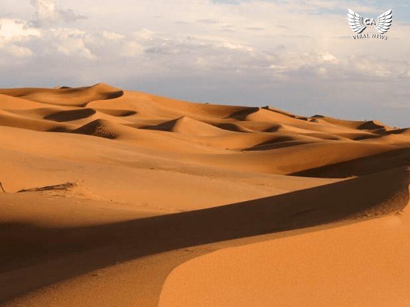 Пустыни Центрально-Азиатского региона планируют внести в список Всемирного наследия ЮНЕСКО