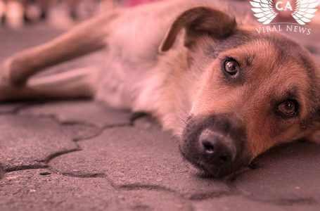 Жители Таджикистана жестко отреагировали в социальных сетях на убийство бездомных собак