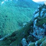 Казахстан не жалеет усилий на сохранение популяции редкого сайгака